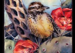 cactus wren on prickly pear