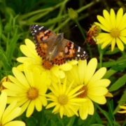 butterfly nature inspiration